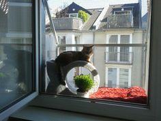 Fenster katzensicher durch den Katzenbalkon vom Katzennetz Profi