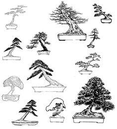 Resultado de imagem para estilos bonsai
