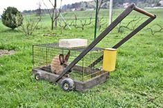 Organic lawn mower aka Rabbit Tractor!  #lawnchewer #rabbitpower #grasspower