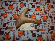 XXL Deer Antler Dog Chew Lot 6089 by WildandWooleyTreats on Etsy