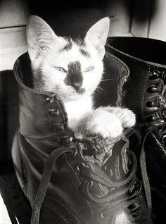 """The ORIGINAL """"Puss n' Boot"""". Kitty in German Luftwaffe Fallschirmjäger (Paratrooper) boot. Crete. GREECE. 1943"""