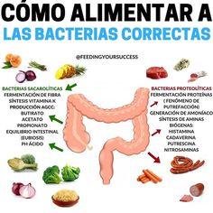 COMO ALIMENTAR A LAS BACTERIAS CORRECTAS . El tema de la salud intestinal es APASIONANTE en el post de hoy queremos tratar de transimitirte qué alimentos son los más adecuados para asegurar una buena salud intestinal y cuales es mejor evitar pero lo más importante: PORQUÉ. Las bacterias que nos interesa mantener son las que se encuentran en el Colon ascendente en esta zona del intestino es dónde se encuentran las bacterias sacarolíticas aquellas encargadas de fermentar las fibras no digeridas Flora Intestinal, Cancer, Health Fitness, Keto, Nutrition, Weight Loss, Meals, Recipes, Food