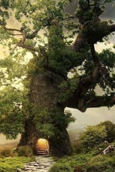 The Magic Tree. There's a poem that goes with it. Click on Susan Noyes Anderson poems (below) to read it. #magic #trees #poems Photo from Dot Myl - Google Plus