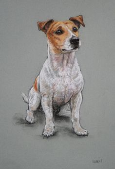 Original soft pastel Jack Russell Terrier dog art drawing sketch 'Cute' by H Irvine by Terrierzs on Etsy https://www.etsy.com/listing/254321370/original-soft-pastel-jack-russell