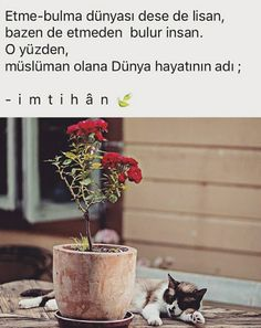 Allah, My World, Happy, Plants, Gifts, Book, Presents, Ser Feliz, Plant