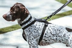 KILLSPENCER Launches a Collection of Quality-Driven Dog Accessories