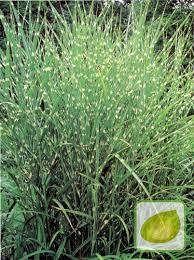 Znalezione obrazy dla zapytania trawy ozdobne w ogrodzie