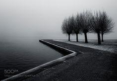 The Trees - Pinned by Mak Khalaf Abstract treeswatersilenceathmosphereWinterGroningen by gerardjonkman