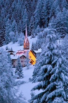 The Dolomites, Snow Forest, Italy
