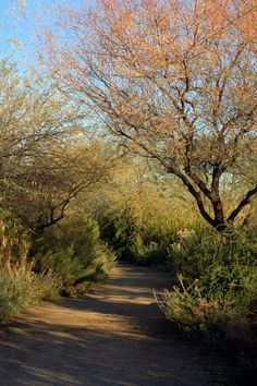 Riparian Preserve - Gilbert, AZ. This is where I walk my dogs every day!  It is just beautiful there!