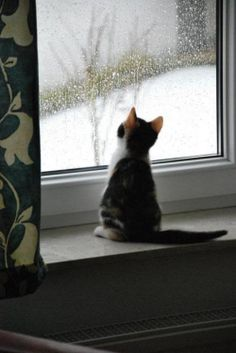 Kitten watching rain on the window