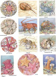 Sea Life Stickers in Full Color: 48 Pressure-Sensitive Designs Dover Publications