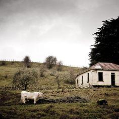 #Rural Animals