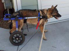 Handicapped Pets: A War Dog Gets His Wheels Still Needs Your Votes