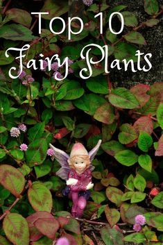 If you are looking for Indoor Fairy Garden Ideas, You come to the right place. Below are the Indoor Fairy Garden Ideas. This post about Indoor Fairy Garden I. Kids Fairy Garden, Indoor Fairy Gardens, Fairy Garden Plants, Fairy Garden Houses, Garden Terrarium, Gnome Garden, Small Gardens, Fairies Garden, Fairy Gardening