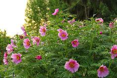 Perennials, Colorful, Plants, Plant, Perennial, Planets