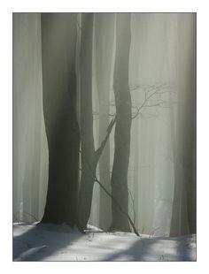 Misty forest: Photo by Photographer Koscsó Gábor http://photo.net/photodb/photo?photo_id=4033268