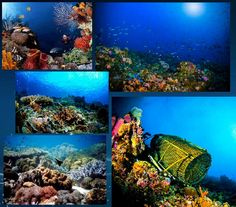 Pantar Strait Marine Park is one of the most beautiful diving sites in Indonesia and comparable only with that of the Caribbean Sea near Central America. This strait is located between Alor and Pantar islands in the Alor Archipelago, East Nusa Tenggara (NTT). This narrow strait has a number of small and beautiful islands such as Kepa, Pura, Ternate, Buaya and Tereweng islands. The waters have a strong current and its sound is as loud as a waterfall.