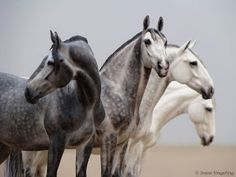 Today I am delighted to share the most outstanding group of model horse photos that I have ever seen. Everything about these pictures is fir...