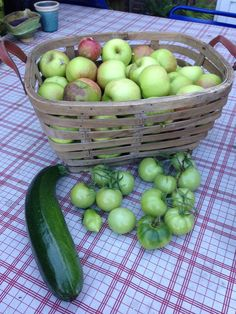 About 7 kilos of apples from one tree