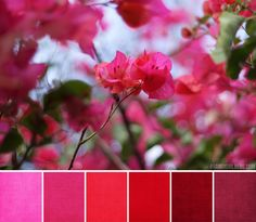 bouganvilla palette...against a golden yellow house <3