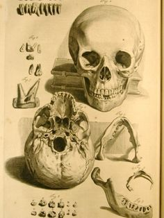 The Anatomy of Humane Bodies (1698) by William Cowper.