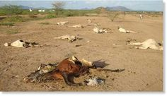 Livestock farmers in Samburu County are counting losses after an estimated 18,000 head of livestock were swept by flash floods following a heavy downpour in the county. Livelihoods are now under threat in an area that has suffered the blunt of...