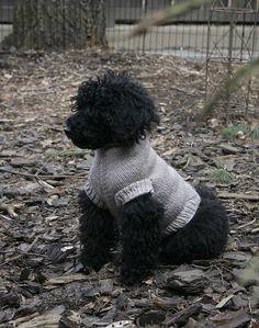 Ravelry: Perfect Fit Dog & Cat Sweater (Pattern Generator, Top-Down) pattern by Jessika Lane