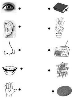 Resultado de imagen para atividades sobre os 5 sentidos no jardim de infancia