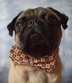 Hund: Bekleidung - Fliege Hundefliege für Halsband oder mit Gummizug - ein Designerstück von guaPETon bei DaWanda