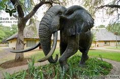 KNP - Letaba - Elephant Hall Elephant, Camping, Pictures, Travel, Animals, Campsite, Photos, Viajes, Animales