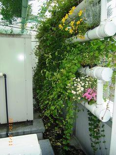 夏のパイプ緑化 の画像|日本一の環境緑化の会社 ㈱プラネットの「生き生き日記」