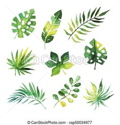 Tropical leaves set, jungle trees, botanical watercolor vector Illustrations on a white background , Illustration Jungle, Leaf Illustration, Bonsai Tree Tattoos, Jungle Tree, Illustration Botanique, Tree Clipart, Leaf Drawing, Ribbon On Christmas Tree, Leaves Vector