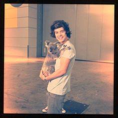 Harry Styles holding a koala. Good night.so cute.....
