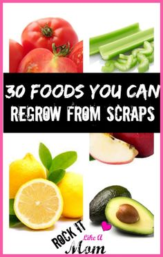30 Foods you can REGROW from the scraps, with instructions on how to grow each! A fantastic way to save on your grocery bill!