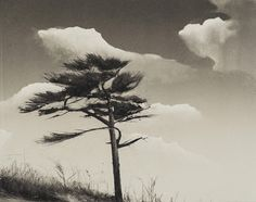 Landscapes – tonal | Wendy Orville