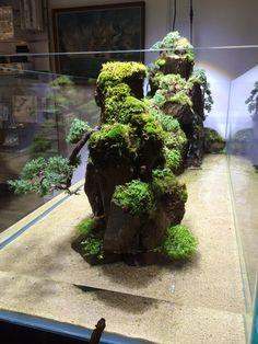 Bonsai Landscape tank by Adrian Weinberg --- Inspiration for Living Board Game. Terrariums, Aquarium Terrarium, Nature Aquarium, Planted Aquarium, Aquarium Fish, Aquascaping, Bonsai, Decoration Plante, Aquarium Design
