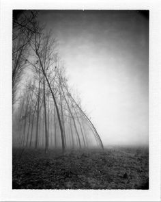 Mamiya Universal, Fuji FP-100B. In Nature, Vegetal, Tree, forest. Water And Wind, The Force Of Nature, photography by Pierre Pellegrini. Image