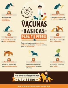 Vacunas basicas para tu perro
