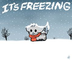 Cat says IT'S FREEZING by Mikasho.deviantart.com on @DeviantArt