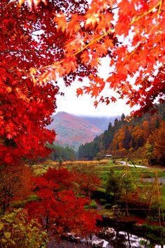 「鶏足寺」,「石道寺」周辺の里山の風景。
