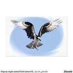Osprey eagle animal bird nature blue sky stationery