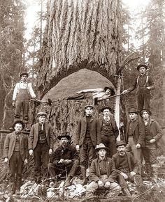 Lumberjacks, Washington State, 1902