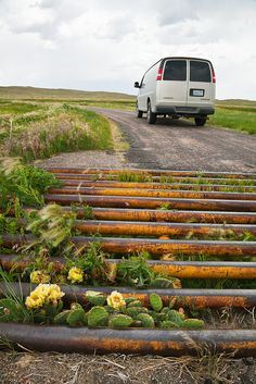 Cattle Guard and Cactus in the Nebraska Sandhills by Lee Rentz, via Flickr