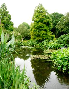 Discover The Beth Chatto Gardens - The Art of Planting at its Best - Most Beautiful Gardens