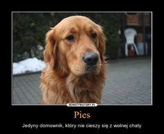 Mem z okazji Dnia Psa Dog Grooming, Best Memes, Jokes, Lol, Funny, Animals, Quote, House, Animales