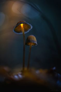 . : like a dream : . - http://www.martin-pfister-photography.de/ hi guys, this is a rework from my first like a dream work with deeper colors and more mood. I dont really like to share one image more times but I like this one much more. Its a early mushroom image this year and I want to share it with you because I want to present my BIG MUSHROOM VIDEO TUTORIAL with this image - the first mushroom tutorial! Just have a look at my page if you are interested! have a good time Martin