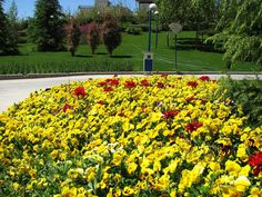 Goftegou Park, #Tehran بوستان گفتگو، تهران  Photos by Faramarz  #Realiran #Iran  www.realiran.org