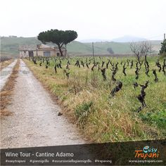 it is wintertime around the DOC wine land of Alcamo: while plants in the vineyards are still sleeping, we are visiting in a wine tour this rare  one with organic soil, made by Cataratto plants, even more than 40 years old, in Alberello style, no pole, no stick to sustain the grapevine, like in old time, very unconventional today   Find out more about the Wine Tour: http://www.easytrapani.com/escursione-winetour.php?id=61 Contact us for booking or for any other customized tour we can…