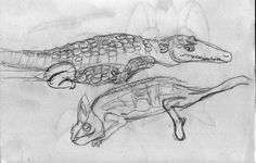 Sketches of reptiles